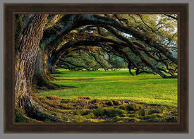 01016_Frame_Example_(Oak_Alley_Afternoon_30x50_Aluminum)
