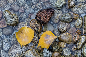 Autumn Leaves in Kings River in Kings Canyon National Park