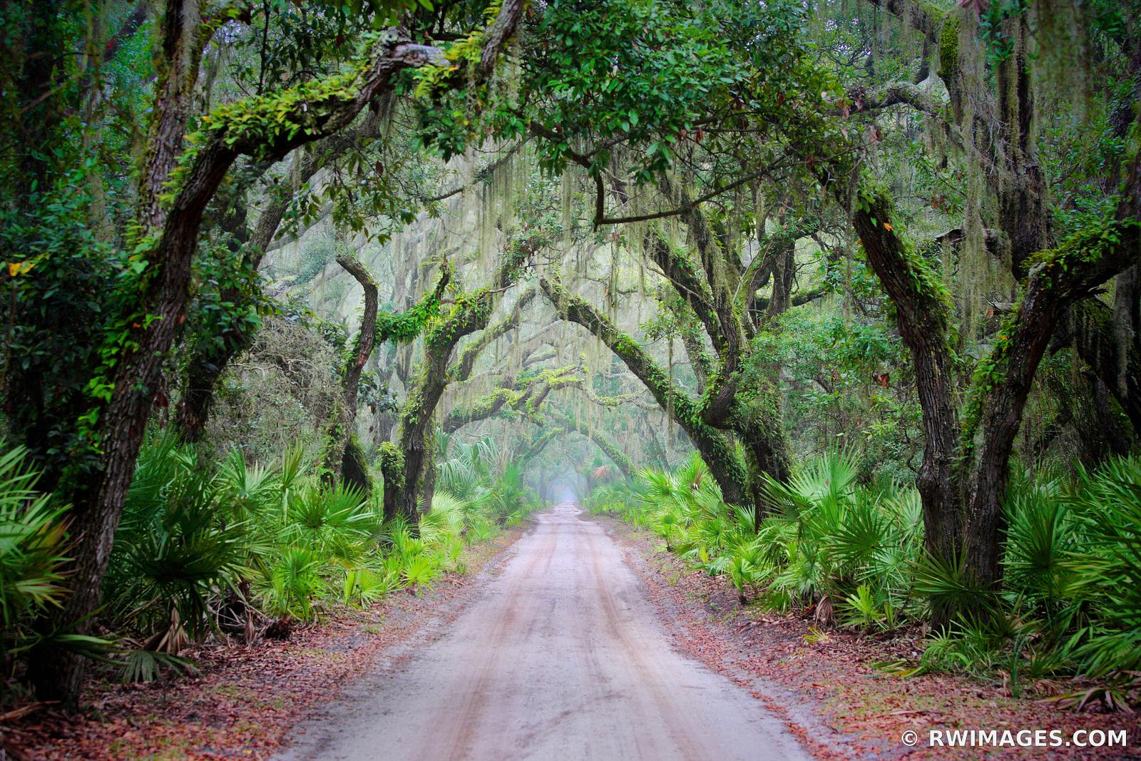 ROAD TO DUNGENESS CUMBERLAND ISLAND GEORGIA FOREST