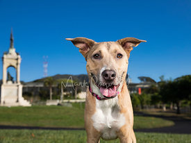 Tan and White Mixed Breed Dog Smiling in San Francisco Park