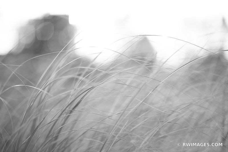 TALLGRASS PRAIRIE BOTANICALS NATURE ABSTRACT BLACK AND WHITE