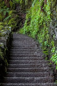 Stairway on Trail in Silver Falls State Park
