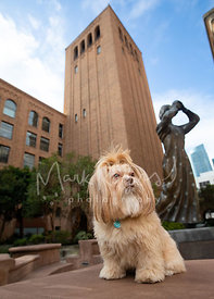 Shih Tzu Mix Dog Sitting Near Statue in SF Plaza