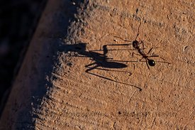 Ant and Shadow at Tumacacori