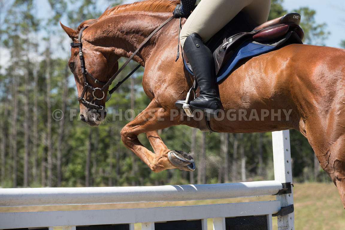 Fast Horse Photography Closeup Jumping Images