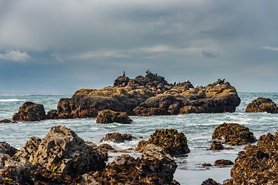 oregon_coast-137
