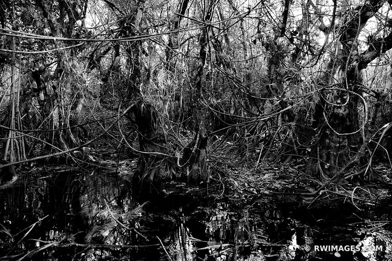 TURNER RIVER BIG CYPRESS NATIONAL PRESERVE EVERGLADES FLORIDA BLACK AND WHITE
