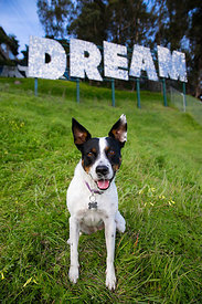 Smiling Mixed Breed Dog  in Front of Dream Sign on Grassy Hill