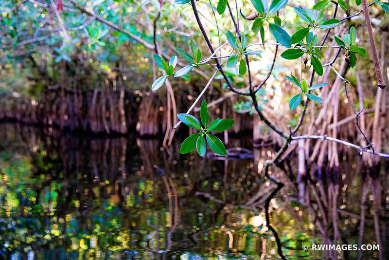 TURNER RIVER BIG CYPRESS NATIONAL PRESERVE EVERGLADES FLORIDA COLOR