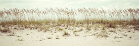 Pensacola Florida Beach Grass Beachscape Panorama Photo