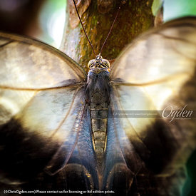Owl Butterfly w-Jewel Exclamations Inside