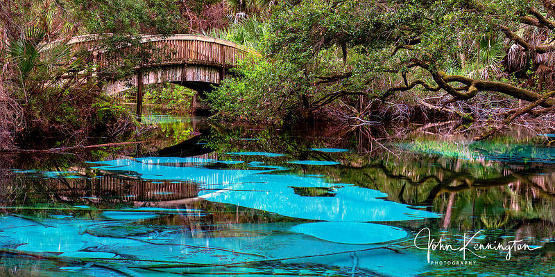 Fern Hammock Springs Panoramic, Ocala National Forest, Florida