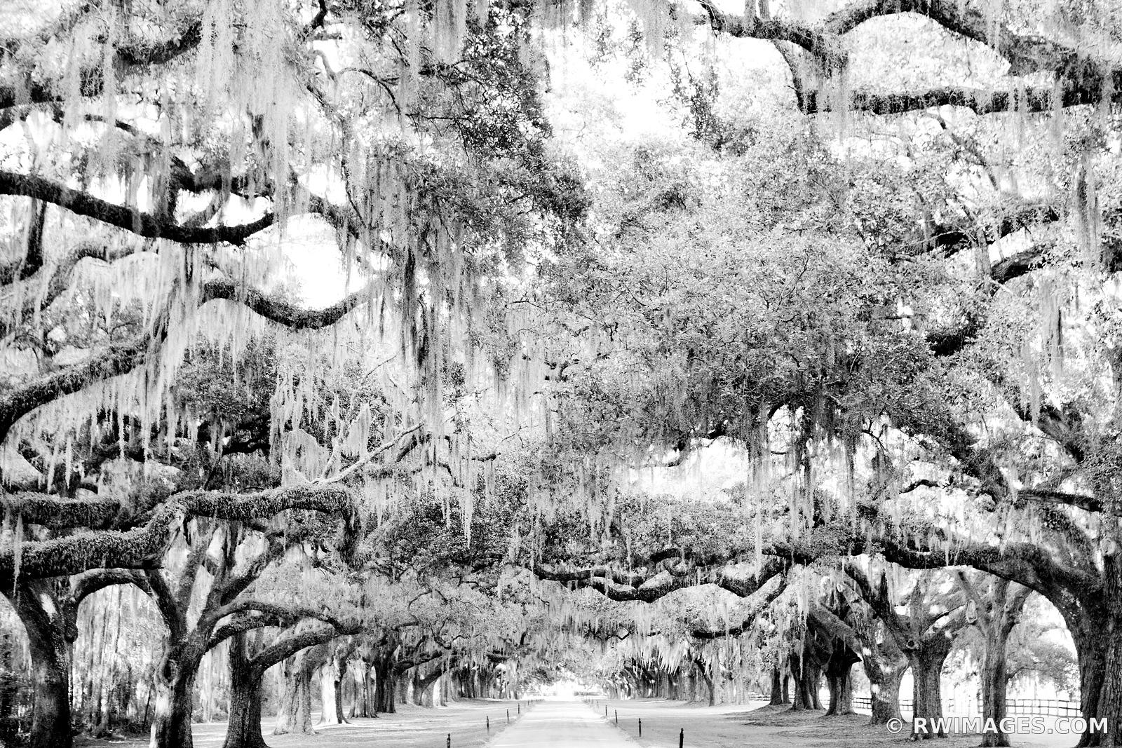 BOONE HALL PLANTATION CHARLESTON SOUTH CAROLINA BLACK AND WHITE
