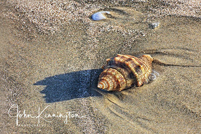 Shell on Beach No. 4, Galveston, Texas