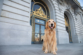 Golden Retriever Sitting in Front of SF City Hall