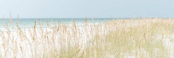 Beach Grass and Sea Oats Pensacola Florida Photo