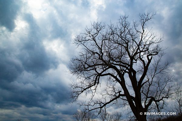 WINTER TREE STORMY SKIES CHICAGO NORTH SHORE MIDDLEFORK SAVANNA LAKE FOREST ILLINOIS MIDWEST LANDSCAPE NATURE