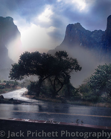 Zion Canyon, tree in thunderstorm
