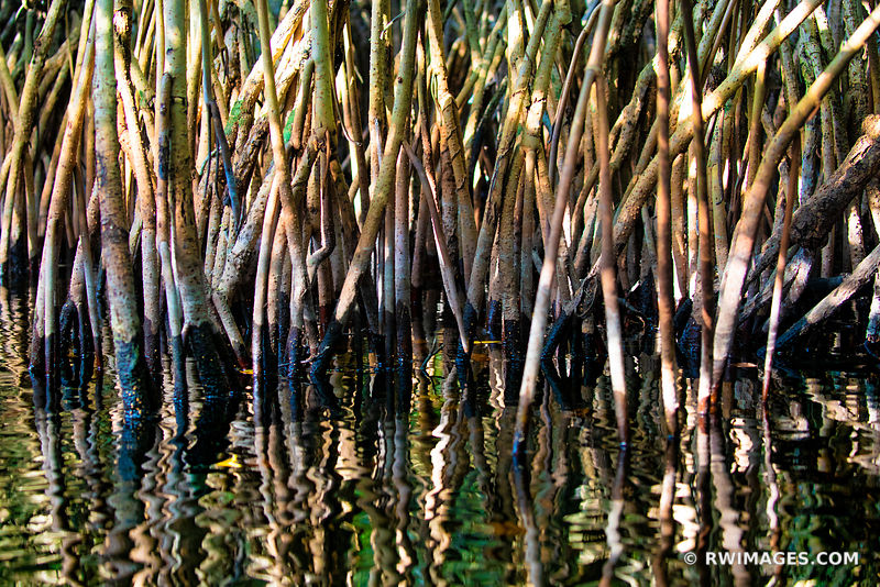 NATURE ABSTRACT MANGROVES TURNER RIVER BIG CYPRESS NATIONAL PRESERVE EVERGLADES FLORIDA