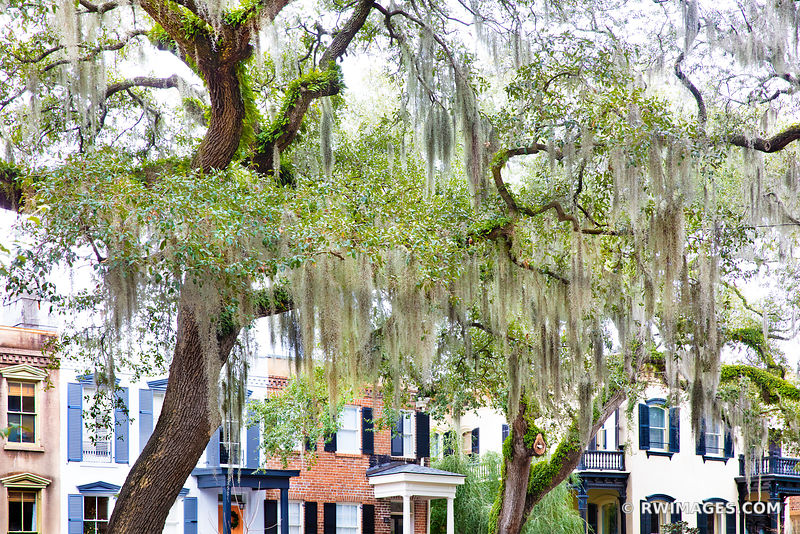 HISTORIC SAVANNAH ARCHITECTURE LIVE OAK TREE SPANISH MOSS SAVANNAH GEORGIA