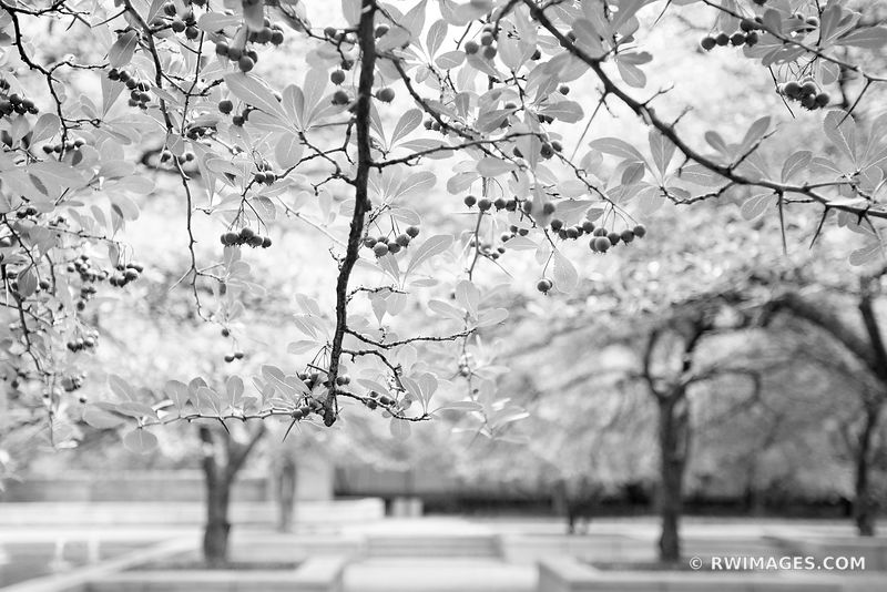 ART INSTITUTE OF CHICAGO SOUTH GARDEN CHICAGO ILLINOIS BLACK AND WHITE