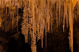 Cave Popcorn on Stalactites in Carlsbad Caverns