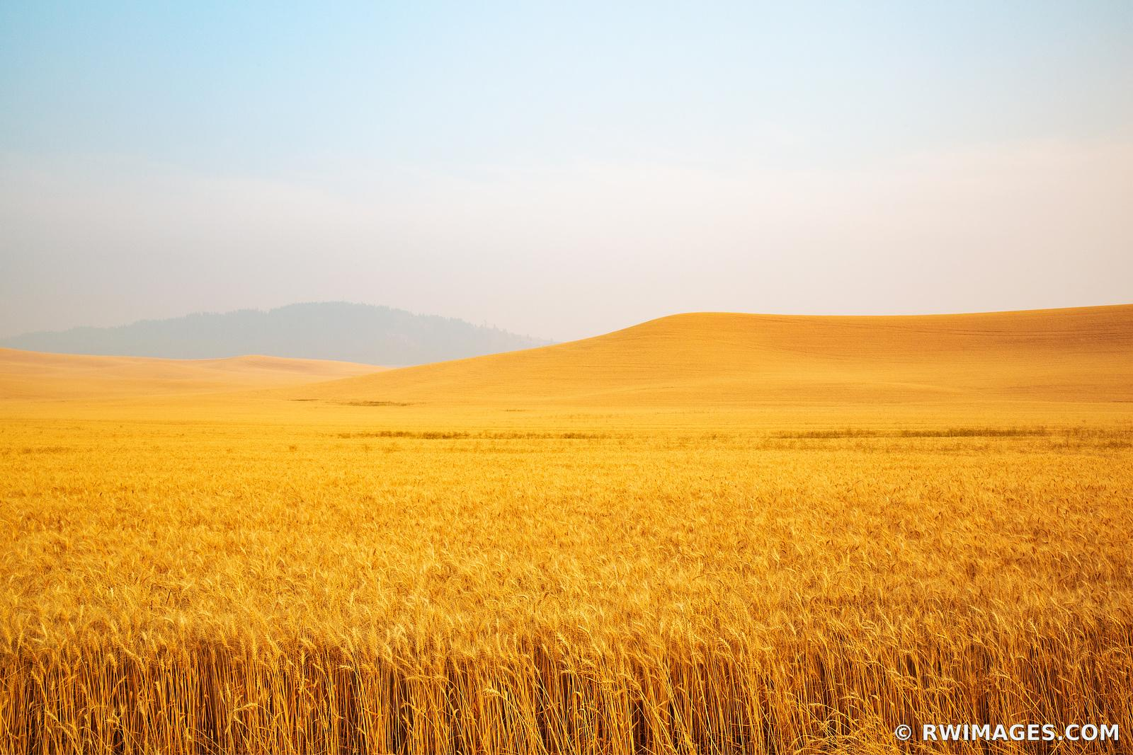 GOLDEN WHEAT FIELD SUMMER HARVEST PALOUSE REGION EASTERN WASHINGTON STATE LANDSCAPE