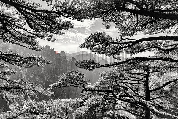 "The ""Grand Canyon"" of the Huangshan Mountains Framed Through Huangshan Pines"