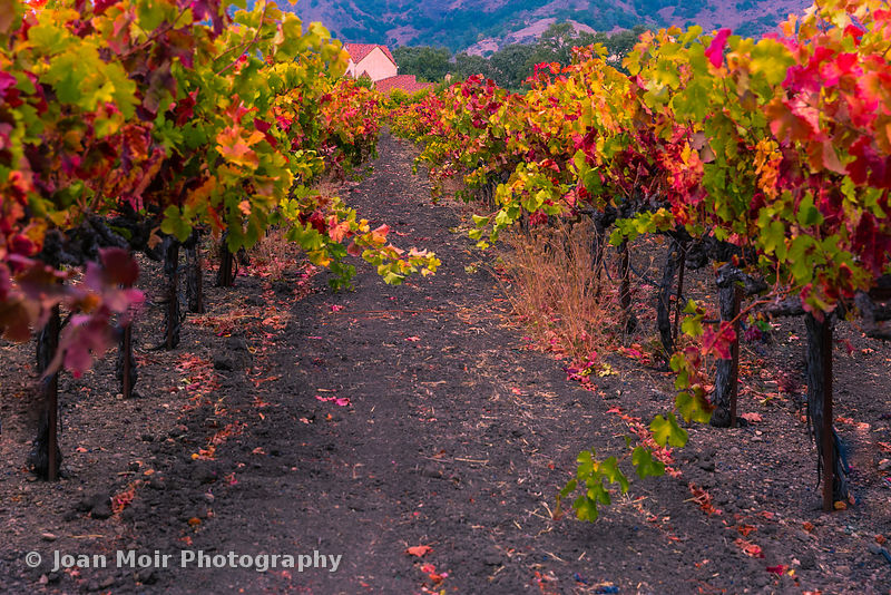 Bennett_Lane_Winery_Calastoga_CA