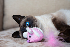 Siamese Cat Staring at Pink Mouse Toy with One Eye