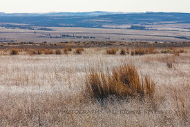 Frost in Malheur National Wildlife Refuge