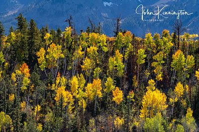 Aspen Ridge, Uncompahgre National Forest, Colorado