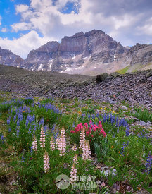 Lupines Below Cirque Peak