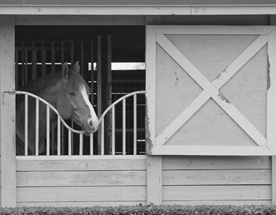 Equestrian_Photo_2