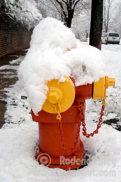 Trying to Hide the Fire Hydrant