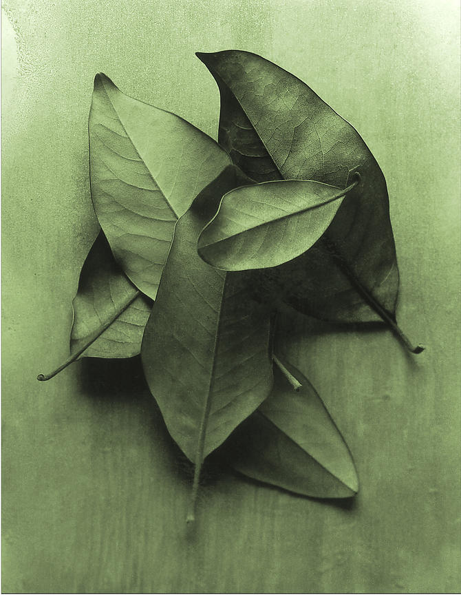 russellpage_2_13x19_300gsm_glossy_book_magnolia_leaf_green