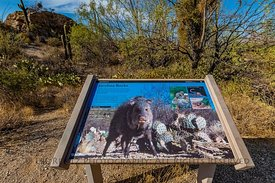 Interpretive Sign at Javalina Rocks in Saguaro National Park