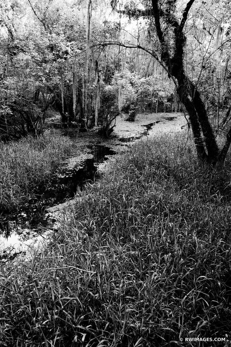 KIRBY STORTER PARK BIG CYPRESS NATIONAL PRESERVE EVERGLADES FLORIDA BLACK AND WHITE VERTICAL
