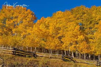 Silver Jack Aspens No 1, Uncompahgre National Forest, Colorado