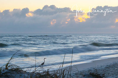 Heron at Sunrise, Pensacola Beach, Florida