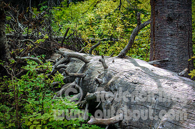 Smooth Fallen Tree
