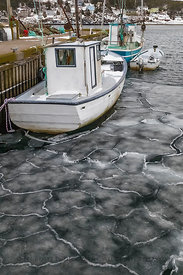 Sea Ice in Newfoundland