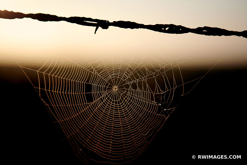 BARBED WIRE AND SPIDER WEB WITH DEW CENTRAL ILLINOIS PRAIRIE SUMMER MORNING