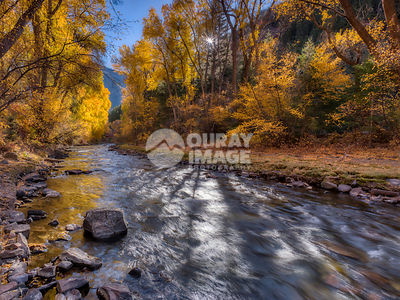 San Miguel River Fall Colors, Telluride