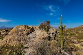 Javalina Rocks in Saguaro National Park