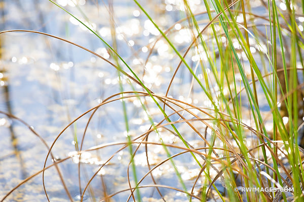 NATURE ABSTRACT PRAIRIE GRASSES EVERGLADES FLORIDA