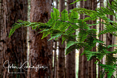 Door County Fern Fronds, Wisconsin