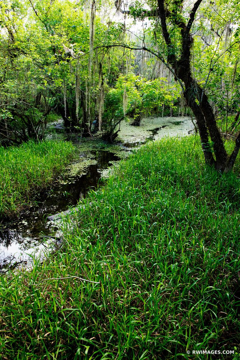 KIRBY STORTER PARK BIG CYPRESS NATIONAL PRESERVE EVERGLADES FLORIDA VERTICAL