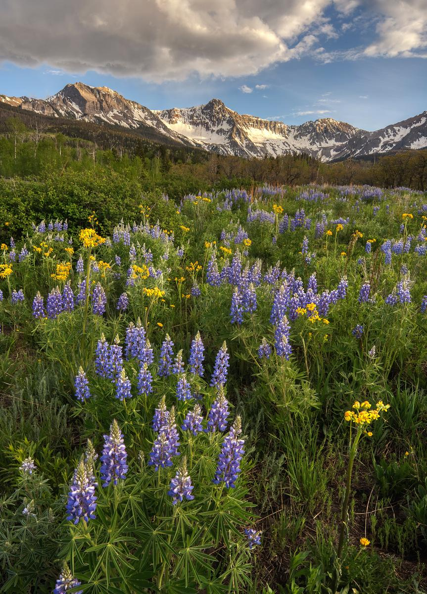 Sneffels Range Wildflower Mix