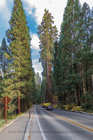 Cars driving through the Giant Sequoias on the Generals Highway in Sequoia National Park